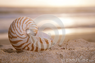 Golden nautilus shell on beach, sunrise and  tropical sea