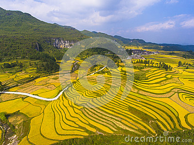 Golden rice fields in the mountain Stock Photo