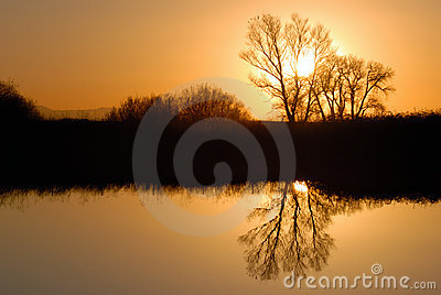 Golden Riparian Reflection