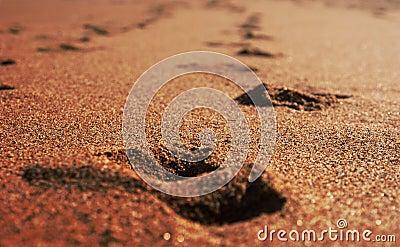 Golden sand on sunny beach