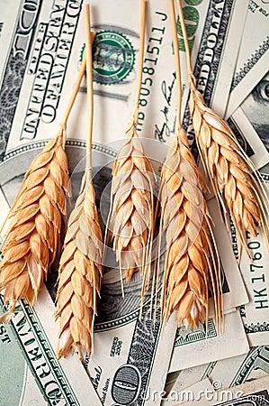 Golden spikes with dollar bills