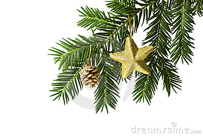 Golden star and pine cone on christmas tree branch