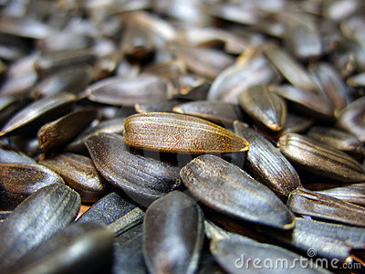Golden sunflower seed