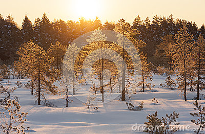 Golden sunrise in marsh at winter in Estonia