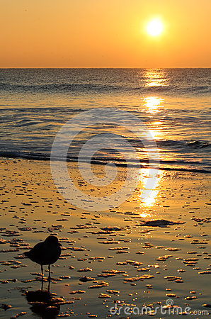 Free Golden Sunrise Seagull Myrtle Beach Stock Photos - 40155533