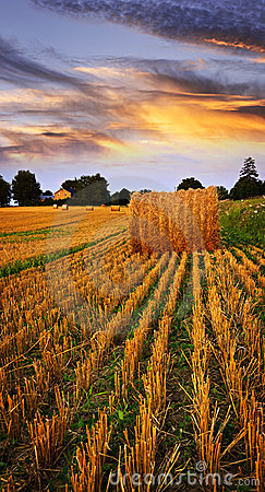 Free Golden Sunset Over Farm Field Royalty Free Stock Images - 12978119