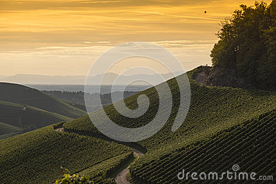 Golden sunset over vineyard landscape