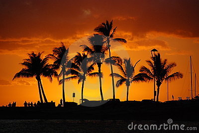 Golden Sunset - Tropical Island