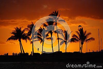 Golden Sunset - Tropical Island