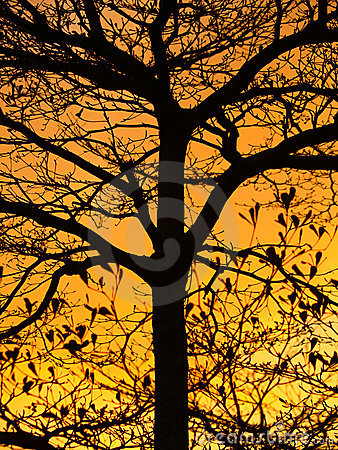 Golden Sunshine and Beautiful Silhouette of Tree