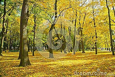 Golden trees in park