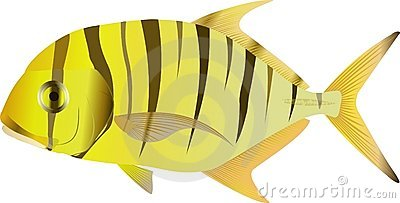 Golden trevally Gnathanodon