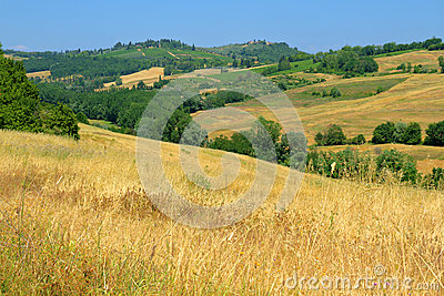 Golden Tusacn fields with a blue sky