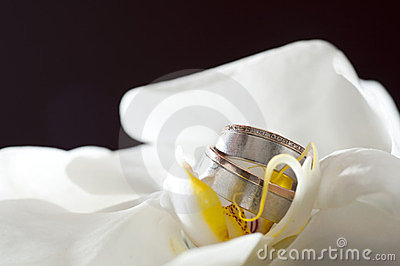 Golden wedding rings laying on white orchid