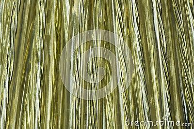 Golden wire coil