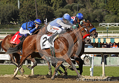 Goldencents Wins The 2013 Sham Stakes Editorial Photo