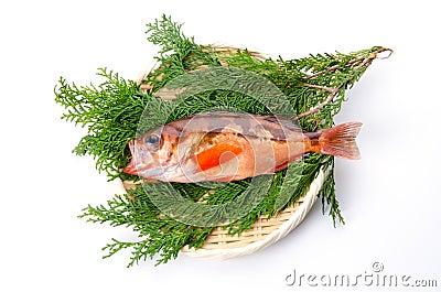 Goldeye rockfish