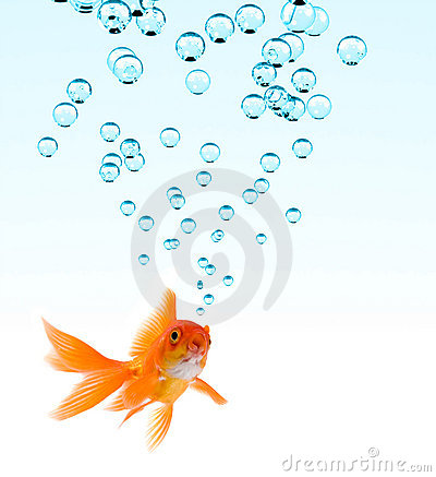 Free Goldfish And Bubbles Stock Photography - 2741422