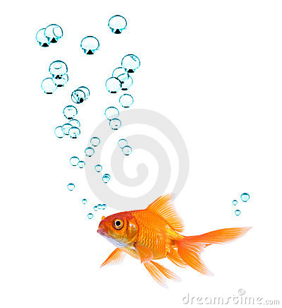 Goldfish And Bubbles Stock Images - Image: 2782274