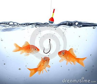 Goldfish in danger