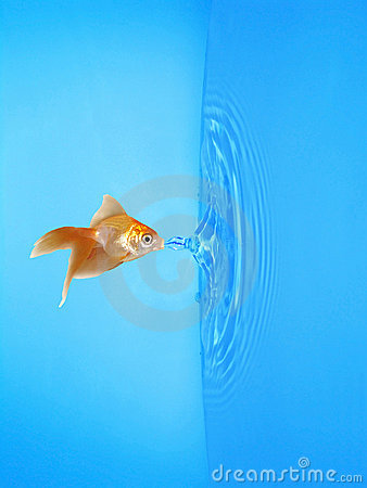 Goldfish Drinking Frozen Water Drop