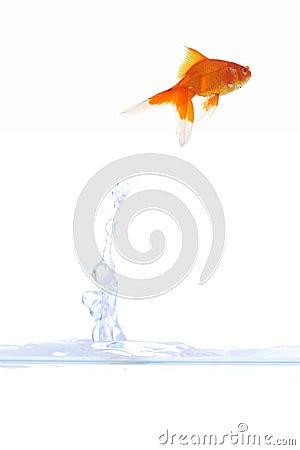 Goldfish escape