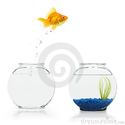 Free Goldfish Escape Stock Photos - 6244723