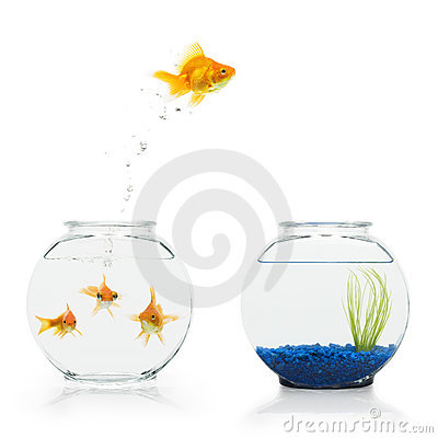Free Goldfish Escape Stock Photography - 6244732