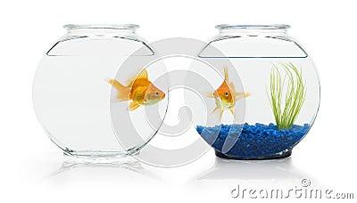 Goldfish Habitats