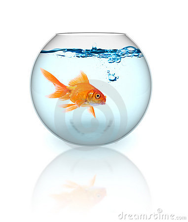 Free Goldfish In A Bowl Stock Photos - 2732123