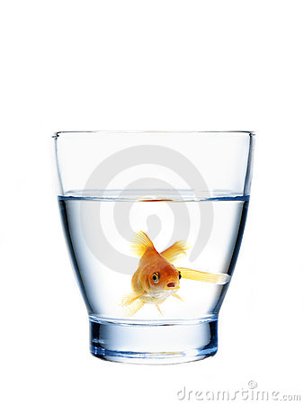Free Goldfish In A Water Glass Royalty Free Stock Photo - 22162645