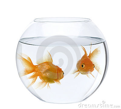 Free Goldfish In Fish Bowl, Against White Background Stock Images - 12246834
