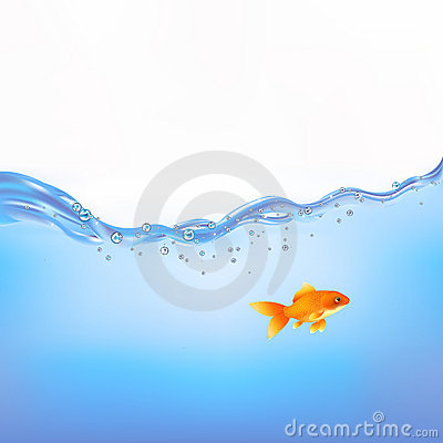 Free Goldfish In Water. Vector Stock Photos - 17888613