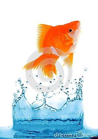Goldfish is jumping