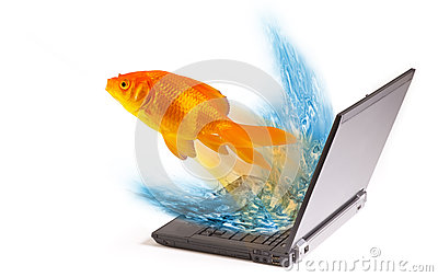 Goldfish jumping from laptop