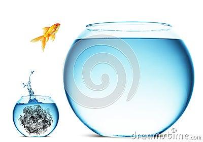 Goldfish jumping in large bowl
