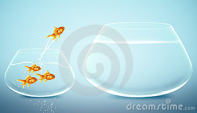 Goldfish  jumping to Big bowl