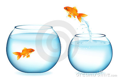 Goldfish Jumping To Other Goldfish. Vector