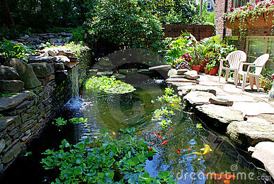 Goldfish and koi pond picture royalty free stock photos for Koi pond music