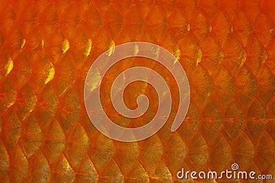 Goldfish Scale
