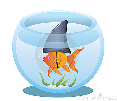 Goldfish Shark in Bowl