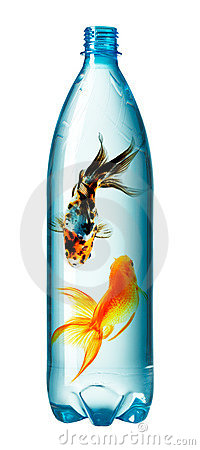 Goldfish swimming in bottle