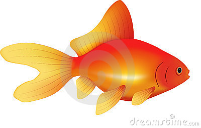 Goldfish | Vector