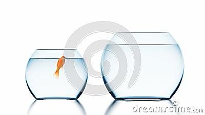Goldfish verbessert die Lebensbedingungen und springt in eine größere Fischschüssel, schöne 3D-Animation auf einem weißen Hinterg stock video footage