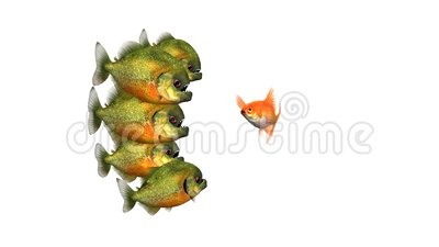 Goldfish zu überleben Telling Tales to Piranhas, Funny Conceptual 3D Animation auf einem weißen Hintergrund, Nahtlos stock video footage