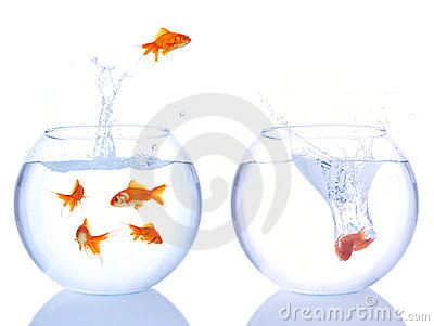 Goldfishes in the air