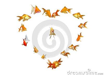Goldfishes (Heart Shaped Frame Background)