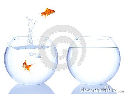 Goldfishes jumping