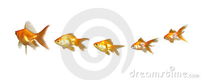 Goldfishes Teamwork and Leadership