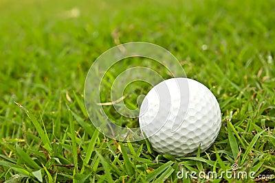 Golf ball on grass.